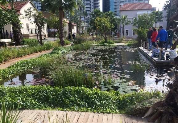 lily ponds, buildings in Sarona