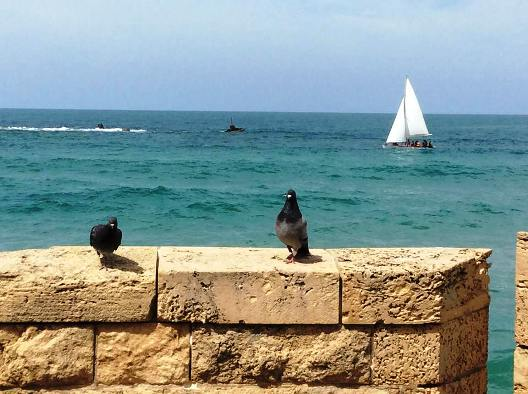 view of the Rocks of Andromeda from the Jaffa Port