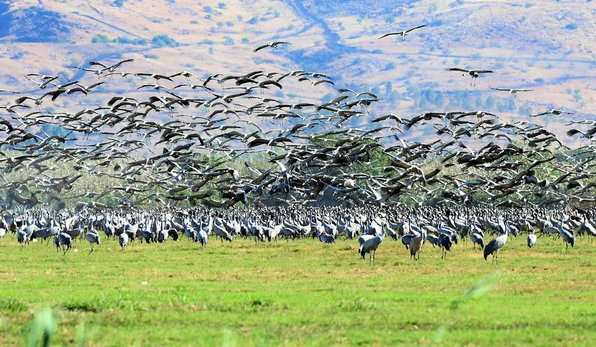 birdwatching in the Hula Valley in the north of Israel during the winter months