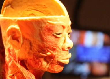 bodies exhibition in tel aviv old train station human head