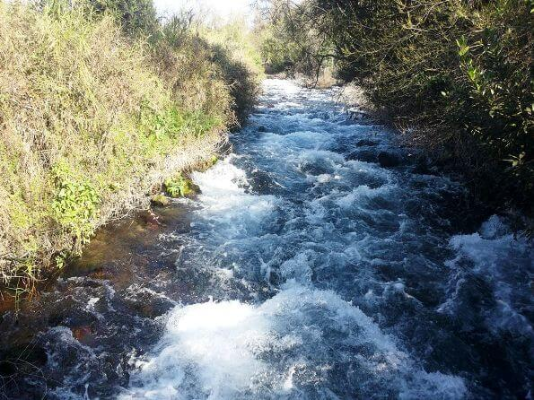 Dan River in north Israel, Tel Dan Nature Reserve