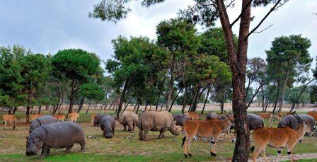 israel zoo and safari herds feeding winter
