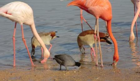 israel zoo and safari pink flamingos at the lake