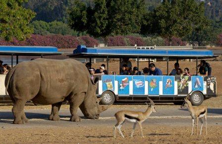 israel zoo safari open bus ride and tour