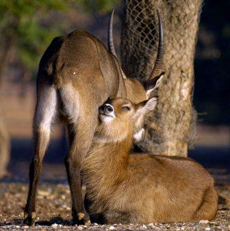 israel zoo and safari water colbosi in love