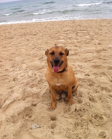 my dog parker at doggie beach in tel aviv