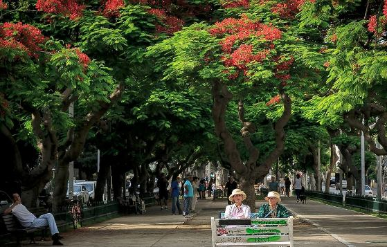 tree-lined Rothschild Blvd in Tel Aviv