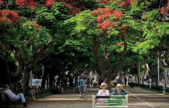 tree-lined Rothschild Boulevard in Tel Aviv
