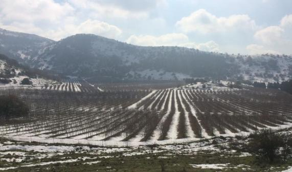 A wine region in the Golan Heights in Israel during the winter snow