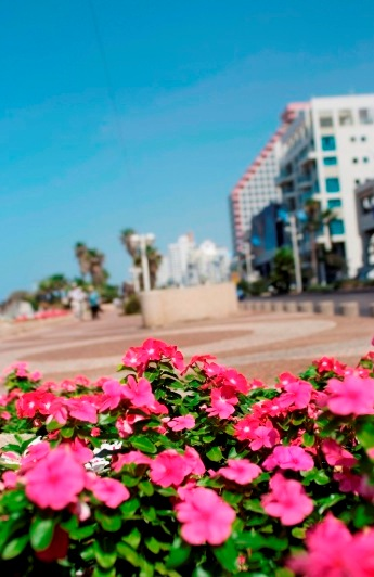 spring at the Tel Aviv promenade near the opera building
