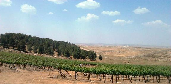 Yatir Vineyards in the Negev Israel Wine Regions